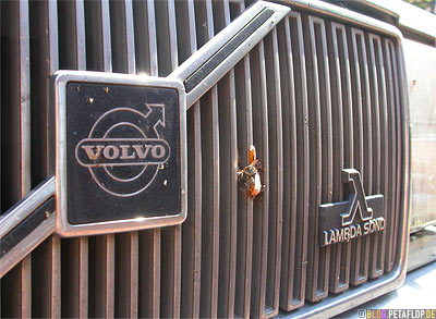 Volvo-760-GLE-Kuehlergrill-radiator-grill-Lambda-Sond-Maikaefer-cockchafer-DSCN6508.jpg