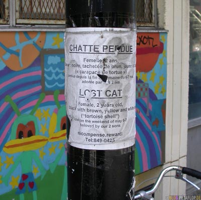 Katze-entlaufen-Montreal-Kanada-Canada-Lost-Cat-DSCN7373.jpg