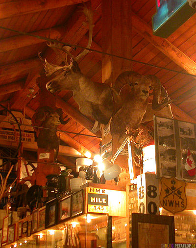 Big-Game-Animal-Heads-Wild-Tierkoepfe-Heritage-Museum-Fort-Nelson-Alaska-Highway-British-Columbia-Canada-Kanada-DSCN9998.jpg