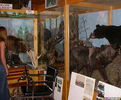 Big-Game-Animals-Wild-Bear-ausgestopfter-Baer-Wolf-Heritage-Museum-Fort-Nelson-Alaska-Highway-British-Columbia-Canada-Kanada-DSCN9971.jpg