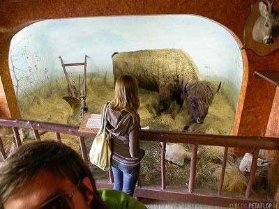 Bison-Heritage-Museum-Portage-la-Prairie-Manitoba-Canada-Kanada-DSCN8576.jpg