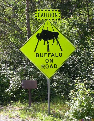 Buffalo-on-road-Sign-Alaska-Highway-Liard-River-Hot-Springs-Heisse-Quellen-BC-British-Columbia-Canada-Kanada-DSCN0344.jpg