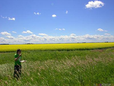 Canola-Field-Rapsfeld-Manitoba-Canada-Kanada-DSCN8625.jpg