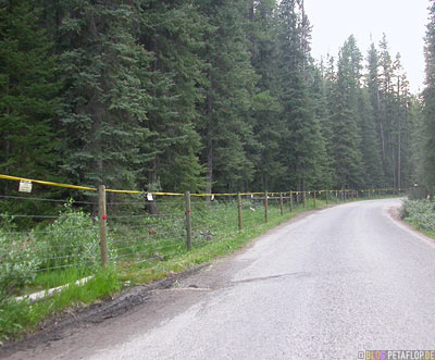 Electric-Fence-against-bears-elektrischer-Zaun-gegen-Baeren-zur-Baerenabwehr-Lake-Louise-Campground-Campingplatz-Banff-National-Park-Rocky-Mountains-Alberta-Canada-Kanada-DSCN9364.jpg