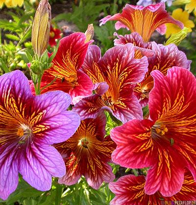 Flowers-Blumen-Jasper-Rocky-Mountains-Jasper-National-Park-Alberta-Canada-Kanada-DSCN9663.jpg