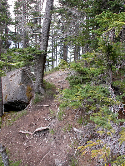 Forest-Wald-Woods-Trees-Rocks-Jasper-National-Park-Rocky-Mountains-Alberta-Canada-Kanada-DSCN9615.jpg