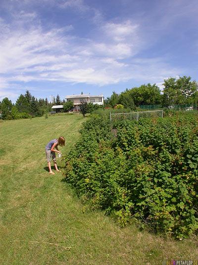 Garden-Garten-St-Saint-Albert-Alberta-Canada-Kanada-DSCN9926.jpg