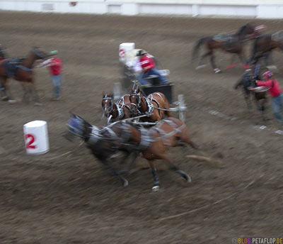 Grand-Stand-Chuckwagon-Race-Calgary-Stampede-2007-Alberta-Canada-Kanada-DSCN9120.jpg