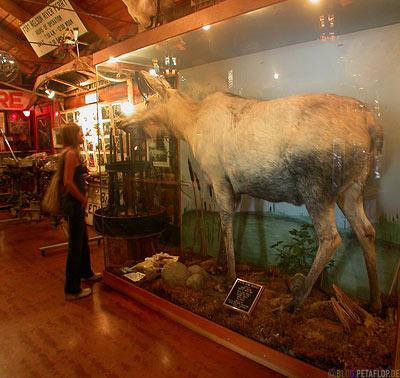 Heritage-Museum-Fort-Nelson-white-Albino-Moose-weisser-Elch-Alaska-Highway-British-Columbia-Canada-Kanada-DSCN9989.jpg