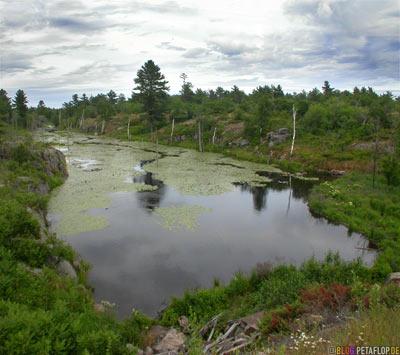 Lake-unberuehrte-Natur-See-Gewaesser-Magnetawan-Ontario-Canada-Kanada-DSCN7885.jpg