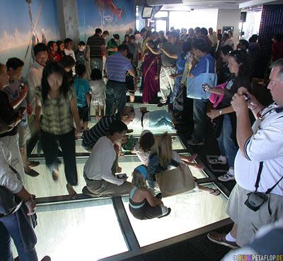 People-on-View-through-glass-floor-Blick-durch-den-Glasboden-CN-Tower-Blick-vom-Toronto-Ontario-Canada-Kanada-DSCN7793.jpg
