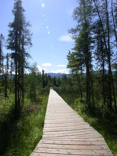 Way-to-Liard-River-Hot-Springs-Heisse-Quellen--Alaska-Highway-BC-British-Columbia-Canada-Kanada-DSCN0339.jpg