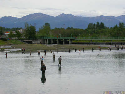 Angler-Sports-Fisher-Salmon-Lachs-Ship-Creek-Anchorage-Alaska-USA-DSCN1400.jpg
