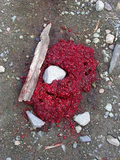 Bear-berry-puke-Baerenbeerenkotze-Kenicott-Kennecott-abandoned-copper-mine-verlassene-Kupfermine-Wrangell-St-Elias-National-Park-Alaska-USA-DSCN2072.jpg