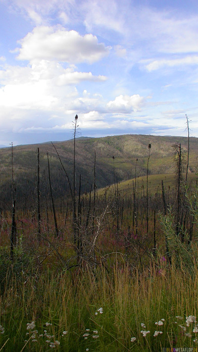 burned-woods-Waldbrand-Scenery-Taylor-Highway-Alaska-USA-DSCN0877.jpg