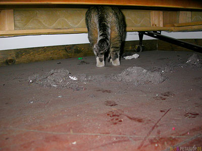 Cat-under-the-bed-dirty-floor-Lancaster-Backpackers-Hostel-McCarthy-Wrangell-St-Elias-National-Park-Alaska-USA-DSCN2119.jpg