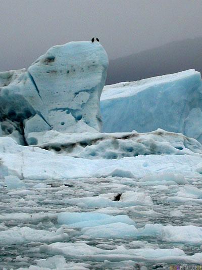 Columbia-Glacier-Gletscher-Icebergs-Eisberge-Eisschollen-Stan-Stephens-Glacier-Cruise-Prince-William-Sound-Valdez-Alaska-USA-DSCN1774.jpg