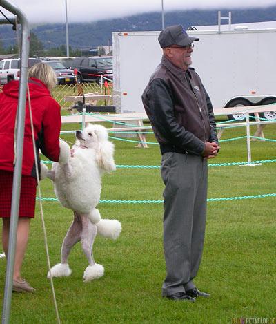 Dog-Show-Competition-Hundeschau-poodle-Pudel-Palmer-Alaska-USA-DSCN1406.jpg