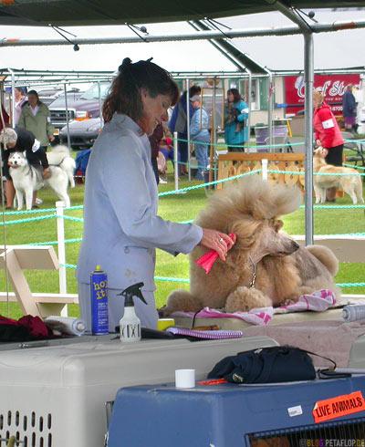Dog-Show-Competition-Hundeschau-Wettkampf-poodle-hairdressing-Pudel-frisieren-Palmer-Alaska-USA-DSCN1479.jpg