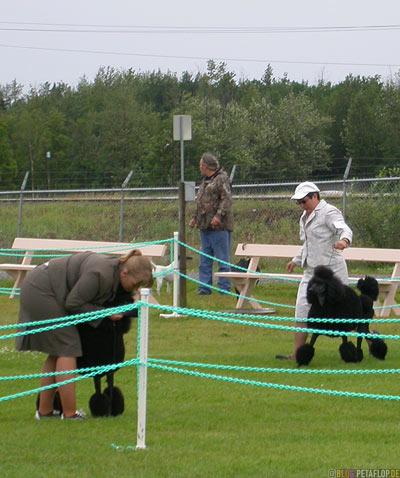 Dog-Show-Competition-Hundeschau-Wettkampf-poodle-Pudel-Palmer-Alaska-USA-DSCN1426.jpg