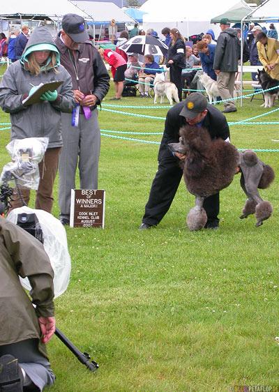 Dog-Show-Competition-Hundeschau-Wettkampf-poodle-Pudel-Palmer-Alaska-USA-DSCN1475.jpg