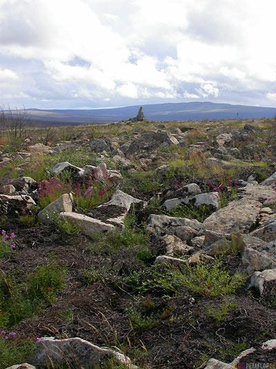 Finger-Rock-Arctic-Alpine-Tundra-Fairbanks-to-Arctic-Circle-Nordpolarkreis-Dalton-Highway-to-Prudhoe-Bay-Alaska-USA-DSCN1079.jpg