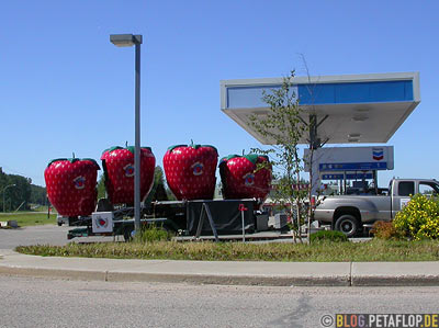 Giant-Strawberries-riesige-Erdbeeren-Chevron-Gas-Station-Smithers-BC-British-Columbia-Canada-Kanada-DSCN2633.jpg
