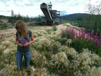 Gras-grass-Fireweed-old-Gold-Dredge-Gold-Baggerschiff-Chicken-Taylor-Highway-Alaska-DSCN0913.jpg