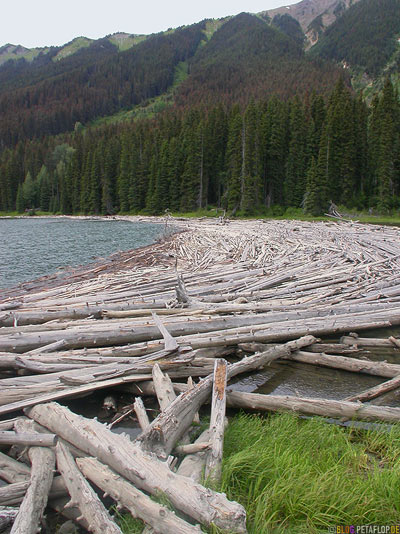 Logs-Tree-Trunks-Baumstaemme-See-Lake-BC-British-Columbia-Canada-Kanada-DSCN2861.jpg