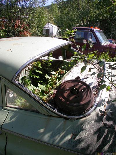 old-car-cadillac-raspberries-Dawson-City-Yukon-Canada-Kanada-DSCN0712.jpg