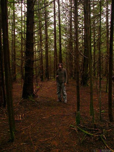 Rainforest-Pacific-Rim-National-Park-near-Tofino-Vancouver-Island-BC-British-Columbia-Canada-Kanada-DSCN3149.jpg