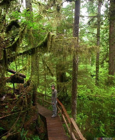 Rainforest-Pacific-Rim-National-Park-near-Tofino-Vancouver-Island-BC-British-Columbia-Canada-Kanada-DSCN3173.jpg