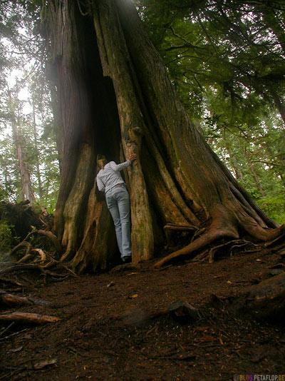 Rainforest-Pacific-Rim-National-Park-near-Tofino-Vancouver-Island-BC-British-Columbia-Canada-Kanada-DSCN3176.jpg