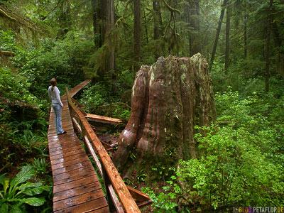 Rainforest-Pacific-Rim-National-Park-near-Tofino-Vancouver-Island-BC-British-Columbia-Canada-Kanada-DSCN3179.jpg