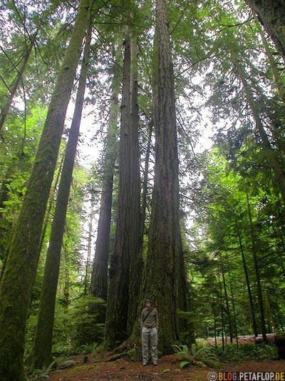 Rainforest-Regenwald-Douglas-Fir-Fichten-Mac-Millan-Provincial-Park-Cathedral-Grove-Vancouver-Island-BC-British-Columbia-Canada-Kanada-DSCN2932.jpg