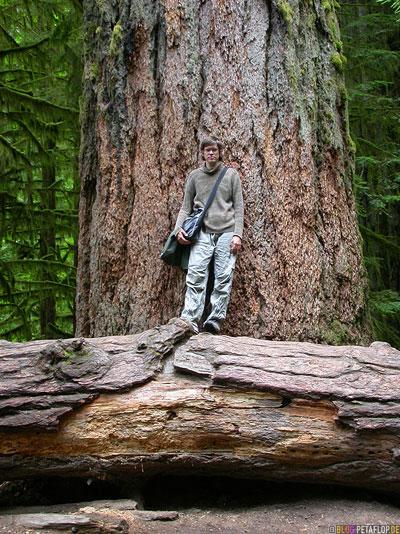 Rainforest-Regenwald-Douglas-Fir-Fichten-Mac-Millan-Provincial-Park-Cathedral-Grove-Vancouver-Island-BC-British-Columbia-Canada-Kanada-DSCN3018.jpg