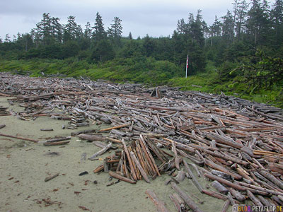 Sea-Logs-Strandgut-Sand-Strand-Treibgut-Pacific-Rim-National-Park-near-Tofino-Beach-Vancouver-Island-BC-British-Columbia-Canada-Kanada-DSCN3105.jpg