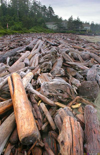 Sea-Logs-Strandgut-Treibgut-Pacific-Rim-National-Park-near-Tofino-Beach-Floatsam-Vancouver-Island-BC-British-Columbia-Canada-Kanada-DSCN3101.jpg