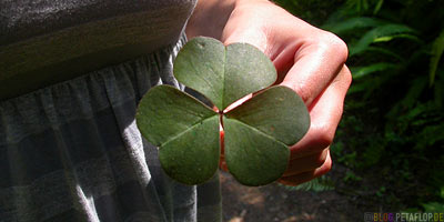 cloverleaf-Kleeblatt-Redwood-National-Park-California-Kalifornien-USA-DSCN4099.jpg