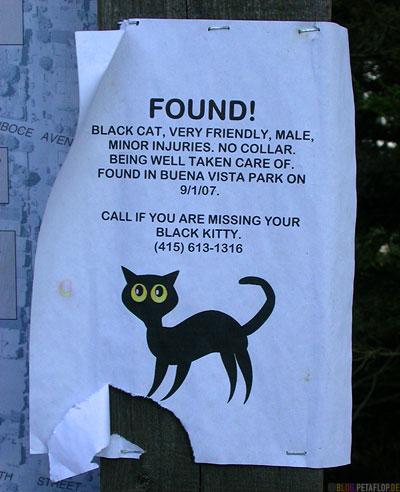 Found-cat-flyer-Buena-Vista-Park-Hill-SF-San-Francisco-California-Kalifornien-USA-DSCN5133.jpg