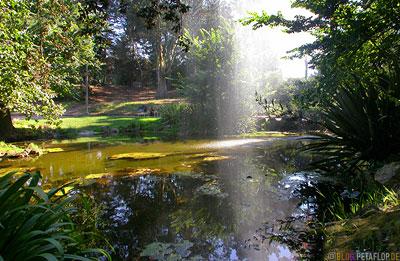 Fountain-Lake-Fontaene-See-Golden-Gate-Park-SF-San-Francisco-California-Kalifornien-USA-DSCN5127.jpg