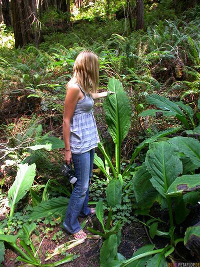 Giant-spinach-Riesen-Spinat-corn-salad-riesiger-Feldsalat-Redwoods-Redwood-National-Park-California-Kalifornien-USA-DSCN4210.jpg