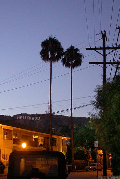 Hollywood-Writing-Hollywood-Hills-Palms-Palmen-Los-Angeles-USA-DSCN5562.jpg