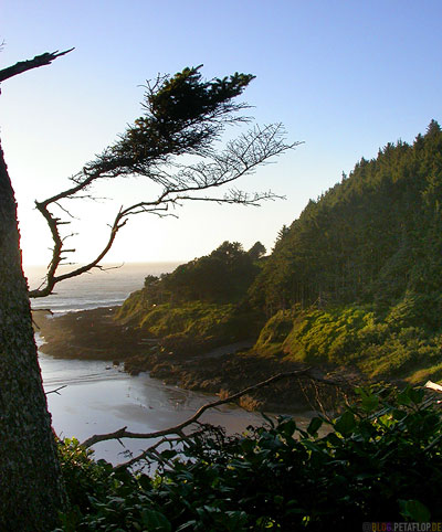 near-devils-churn-Beach-Strand-Tree-Baum-Oregon-Coast-Oregon-USA-DSCN3929.jpg