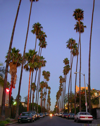 Palms-Palmen-Allee-Hollywood-Los-Angeles-USA-DSCN5556.jpg