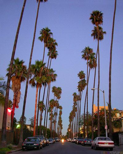 http://blog.petaflop.de/wp-content/uploads/2007/09/palms-palmen-allee-hollywood-los-angeles-usa-dscn5556.jpg