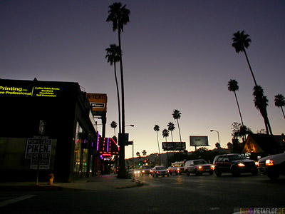 Palms-Palmen-evening-Abend-cars-Autos-Sunset-Boulevard-Hollywood-Los-Angeles-USA-DSCN5507.jpg