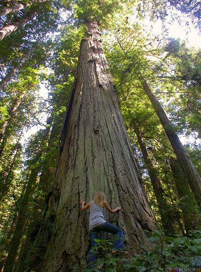 Redwoods-Redwood-National-Park-California-Kalifornien-USA-DSCN4151.jpg
