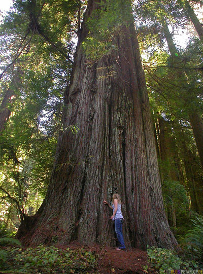 Redwoods-Redwood-National-Park-California-Kalifornien-USA-DSCN4170.jpg