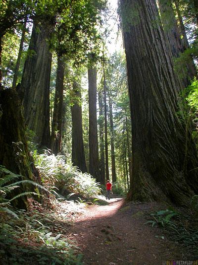Redwoods-Redwood-National-Park-California-Kalifornien-USA-DSCN4203.jpg